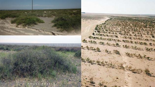 530 hektar alanda 550 bin fidan dikildi