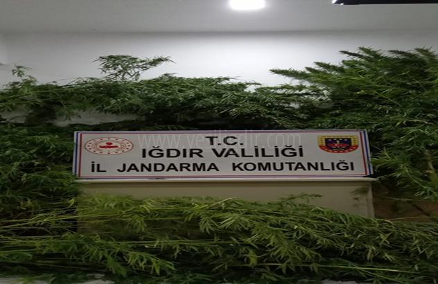 Jandarma'dan Uyuşturucu ile mücadele
