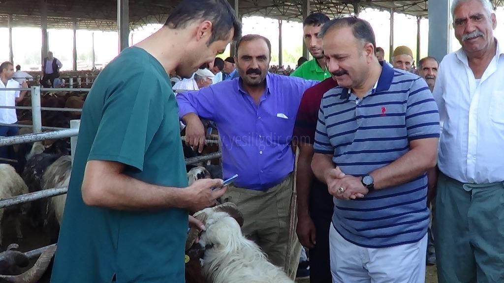 Gıda Tarım ve Hayvancılık Müdürü Hayvan Pazarını Denetledi