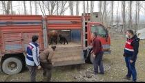 2 koyunu çalan 7 kişi,  jandarma ekiplerince yakalandı