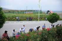 Üniversite Personeli Kampüsteki Gül Fidanlarını Ayıkladı