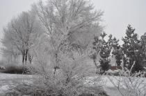 Ağaçlar Kırağı ile Beyaza Büründü