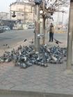 Iğdır'da Yiyecek bulmakta güçlük çeken kuşların imdadına esnaf yetişti