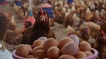 Iğdır'da  Ekim Ayında Zam Şampiyonu Yumurta oldu