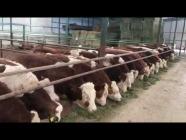 Çiftlikler Batıyor