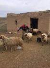 Jandarma Hayvan Hırsızlarını Kıskıvrak Yakaladı