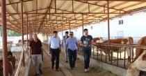 Rektör ve Tarım Müdürü Sahada İnceleme Yapıyor