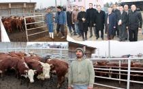 Genç Çiftçi Projesi Kapsamında 25 Çiftçiye 150 adet Büyükbaş Düve desteği yapıldı